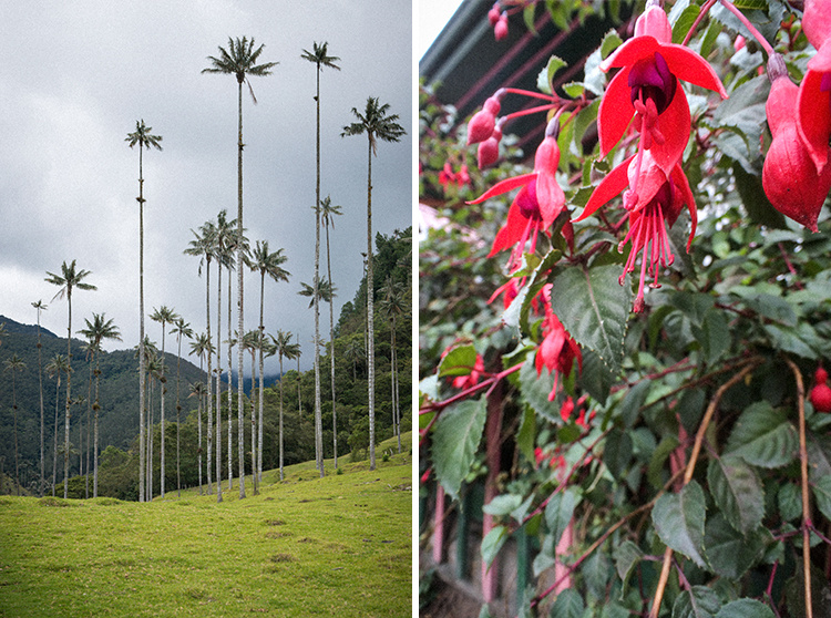 colombia-wax-palms-13