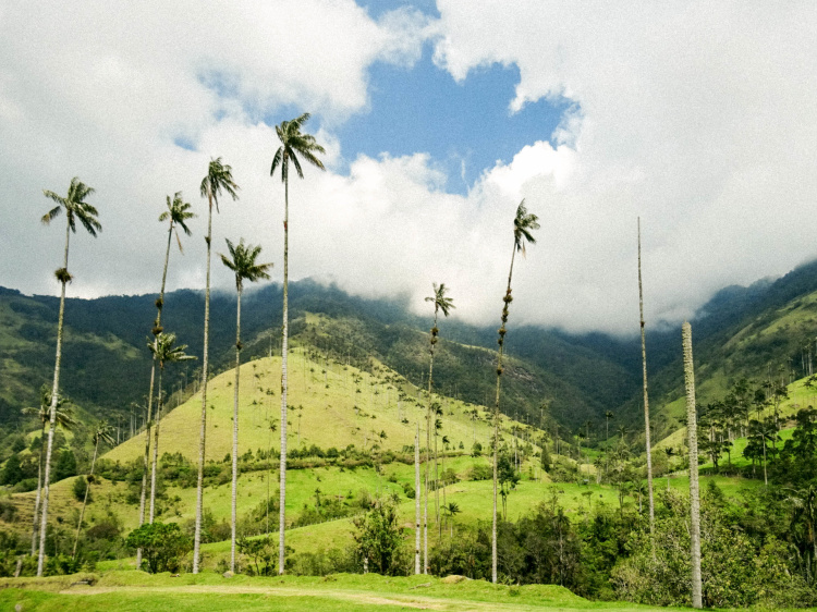 colombia-wax-palms-29