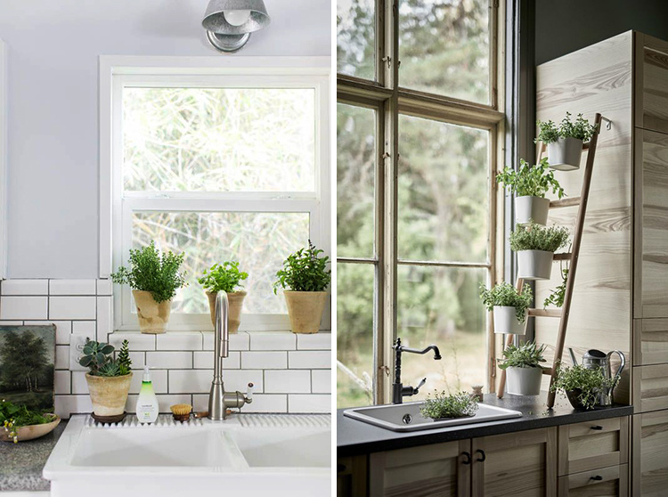 edible-kitchen-plants-02