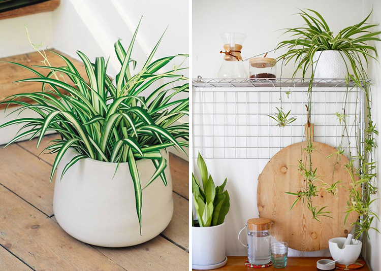 edible-kitchen-plants-06