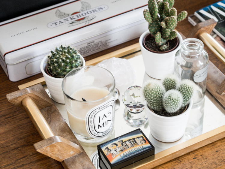 eight-cacti-for-home-00