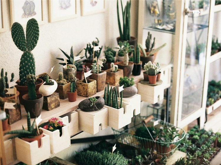 eight-cacti-for-home-01