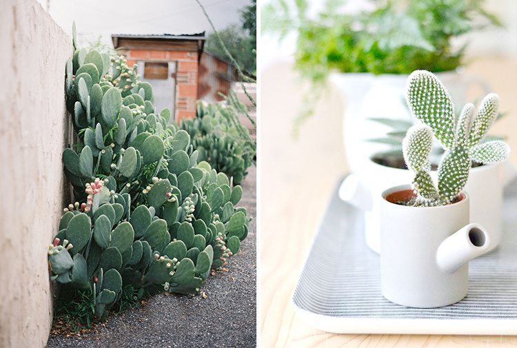 eight-cacti-for-home-03