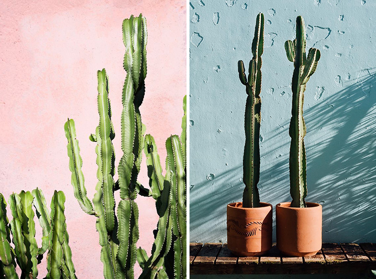 eight-cacti-for-home-08-1