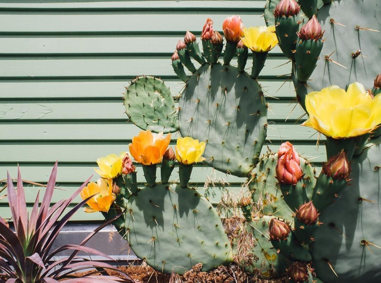eight-cacti-for-home-10-2