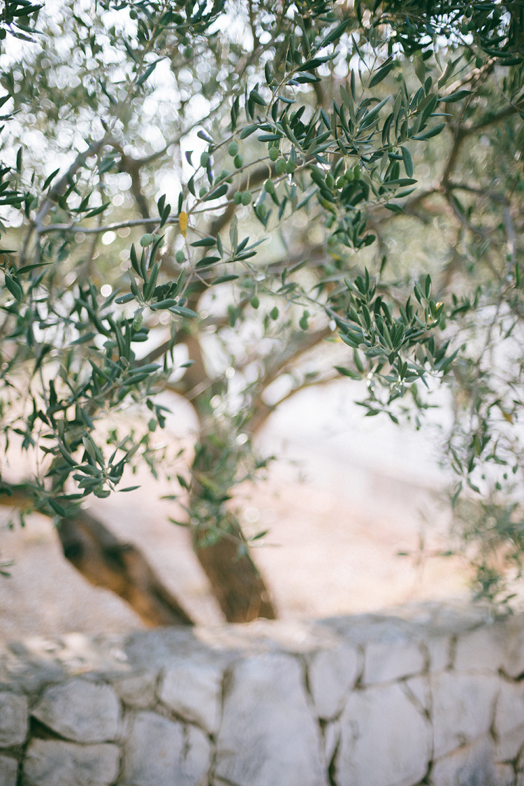ines-perkovic-a-simple-hello-croatia-summer-rogoznica-green-olive-tree-branches-light-sunset