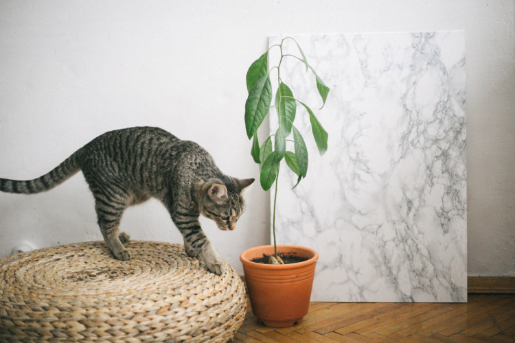 diy-marble-surface-08