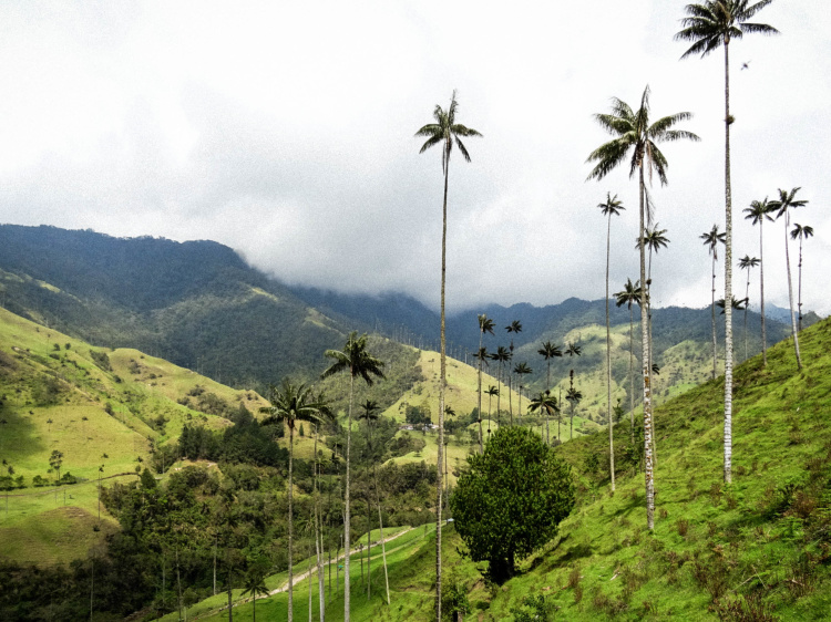 colombia-wax-palms-30
