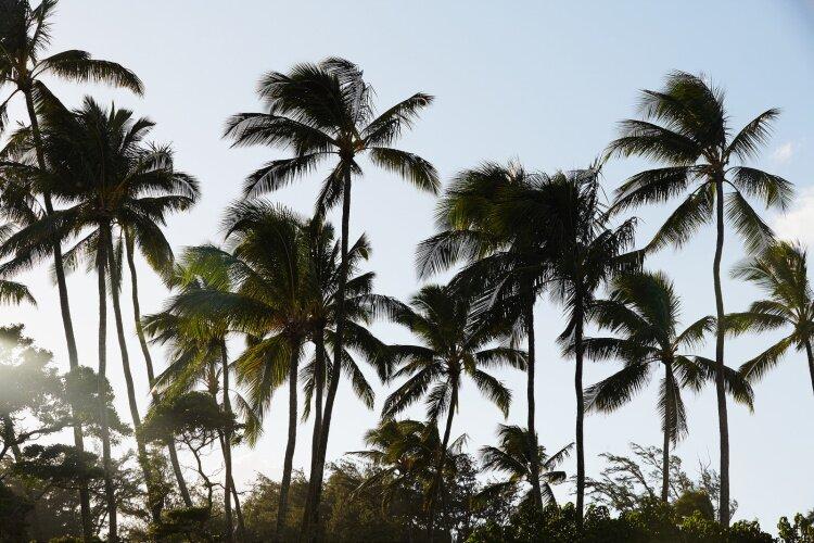 nicolefranzen hawaii SB 12