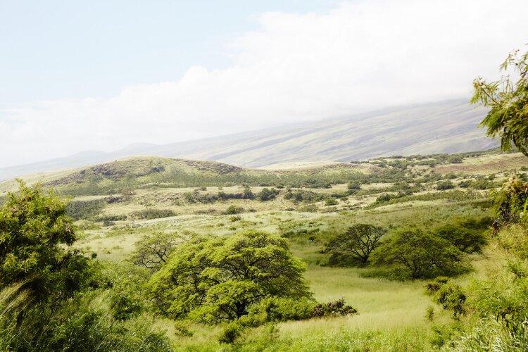 nicolefranzen hawaii SB 16