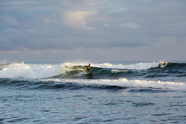 nicolefranzen hawaii SB 30