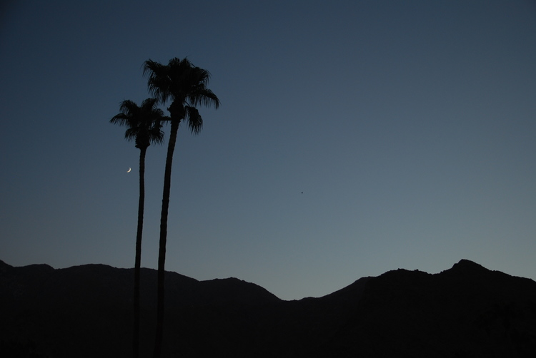 palm-springs-foreign-lands-05